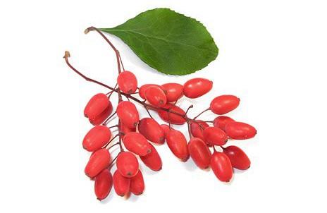 ягоды барбариса для похудения