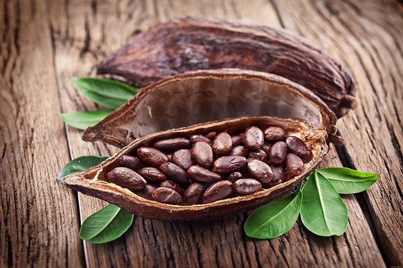 Какао в составе шоколада Слим