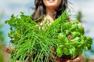 тибетские травы для похудения