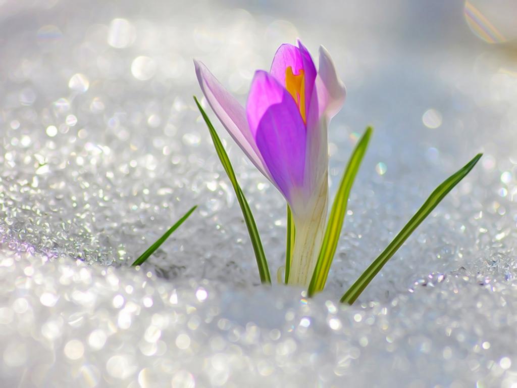 первый цветок
