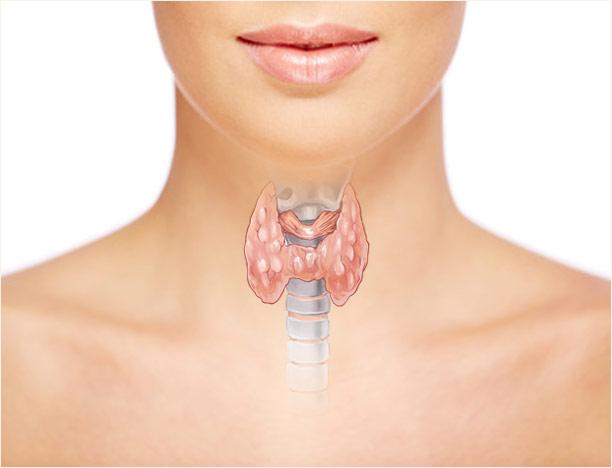 Выработка тироксина щитовидной железой