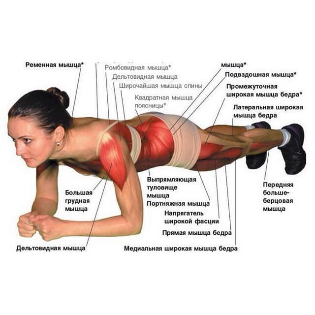 Мышцы, которые тренирует планка