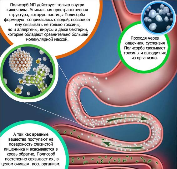 Воздействие полисорба на организм